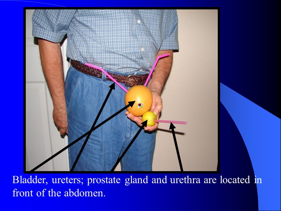This lemon, pierced by another drinking straw, represents the prostate gland: All glands produce specialized secretions that serve specific functions for the body.