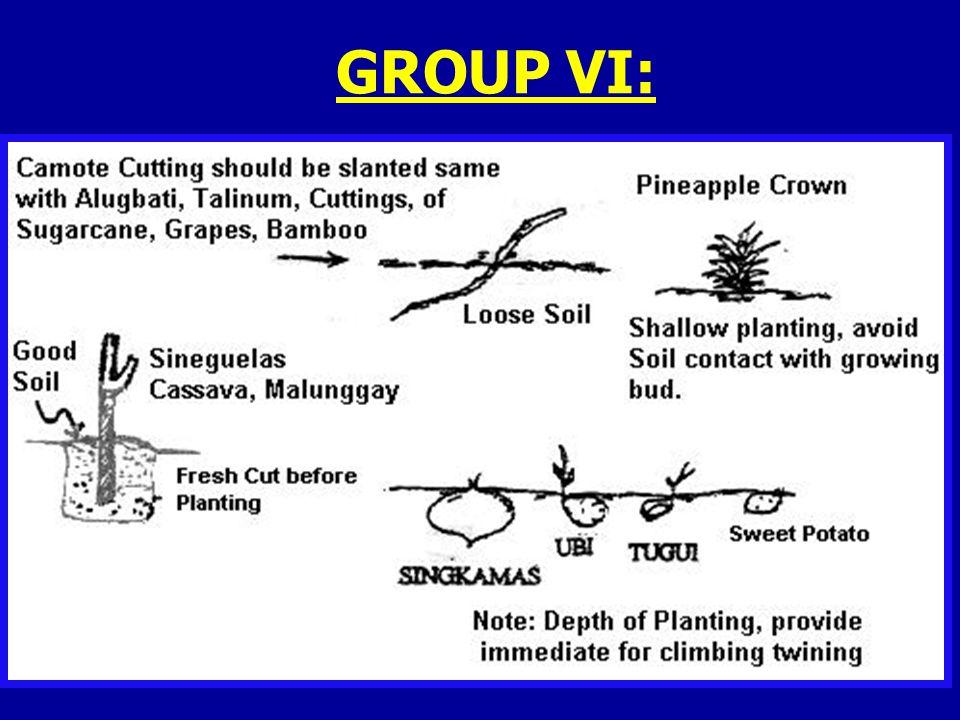 GROUP VI: