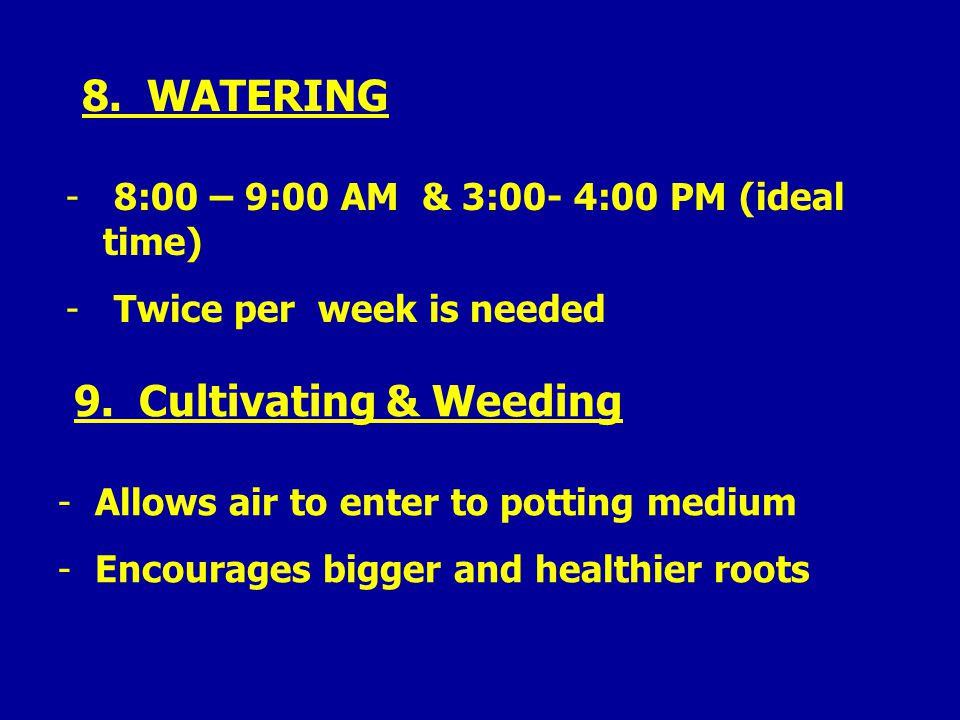 8. WATERING - 8:00 – 9:00 AM & 3:00- 4:00 PM (ideal time) - Twice per week is needed 9.