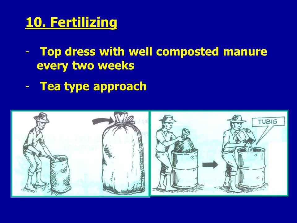 10. Fertilizing - Top dress with well composted manure every two weeks - Tea type approach