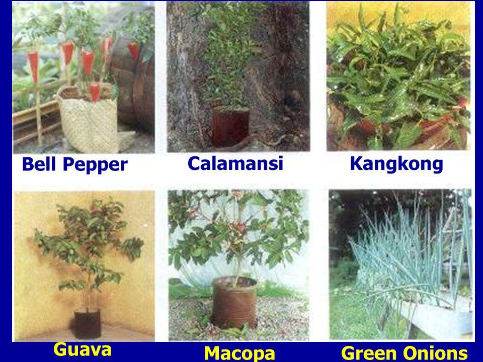 Bell Pepper Calamansi Guava Kangkong MacopaGreen Onions