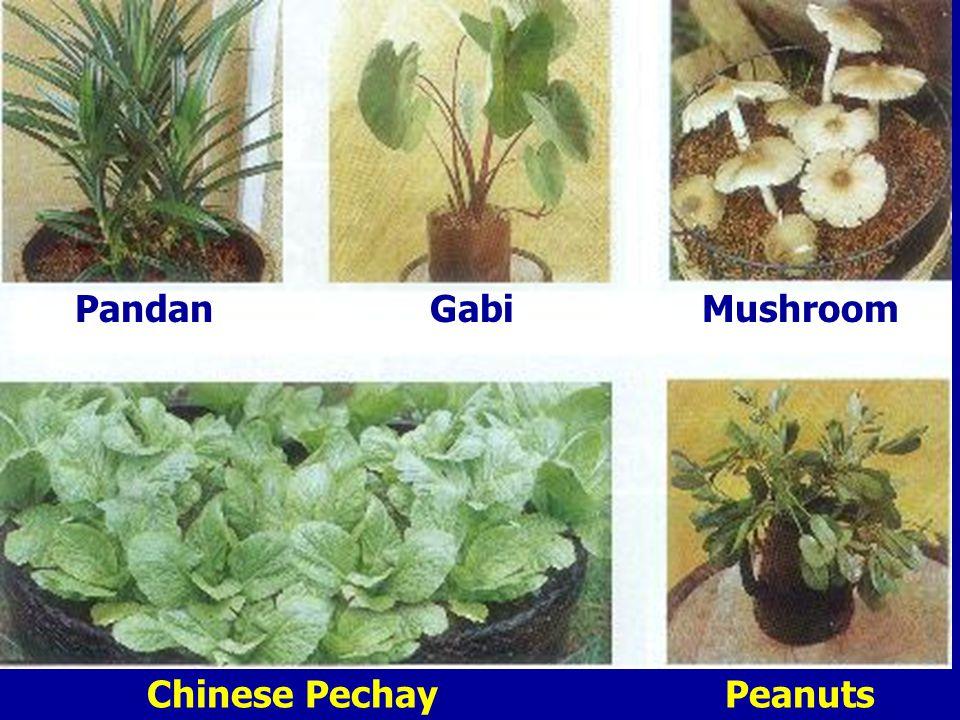 PandanGabiMushroom Chinese PechayPeanuts