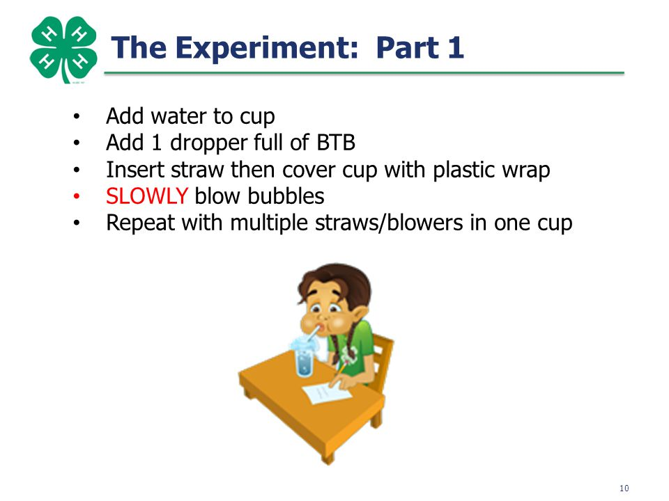 10 The Experiment: Part 1 Add water to cup Add 1 dropper full of BTB Insert straw then cover cup with plastic wrap SLOWLY blow bubbles Repeat with multiple straws/blowers in one cup