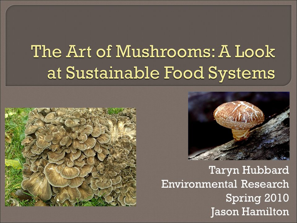  Food and Medicine production Non-timber forest product Exciting biological process Nutrition—Protein, Vitamin B Medicinal—Benefits to immune system Business opportunity  Beneficial decomposition Mycoremediation: Use of fungi to degrade or remove toxins from the environment. 1 Mycoforestry: Restoration, mycorrhizal relationships Natural composters, pesticides, and fungicides