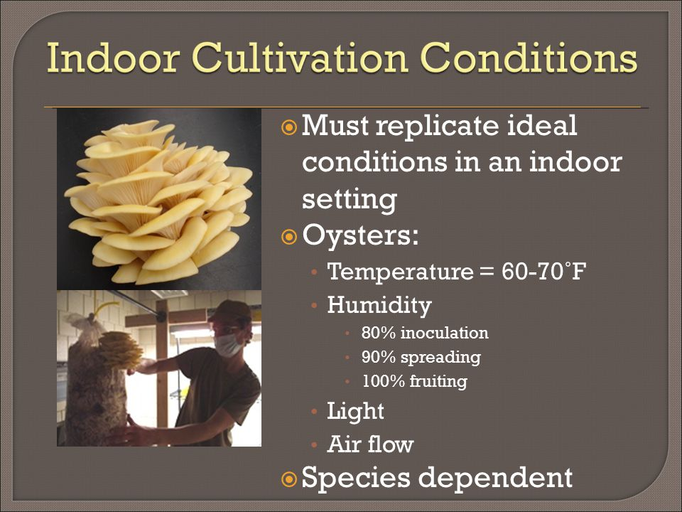  Must replicate ideal conditions in an indoor setting  Oysters: Temperature = 60-70˚F Humidity 80% inoculation 90% spreading 100% fruiting Light Air flow  Species dependent