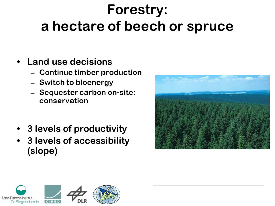 Forestry: a hectare of beech or spruce Land use decisions –Continue timber production –Switch to bioenergy –Sequester carbon on-site: conservation 3 levels of productivity 3 levels of accessibility (slope)