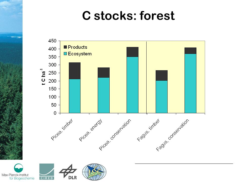 C stocks: forest