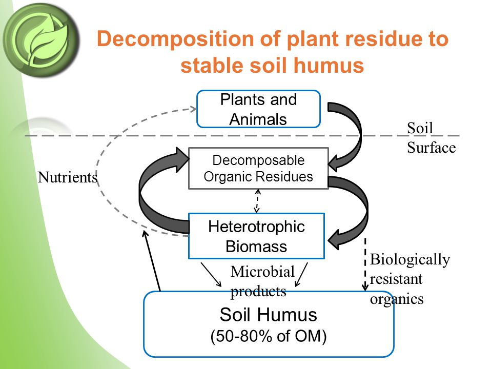 Decomposition of plant residue to stable soil humus Plants and Animals Decomposable Organic Residues Heterotrophic Biomass Soil Humus (50-80% of OM) Soil Surface Biologically resistant organics Microbial products Nutrients