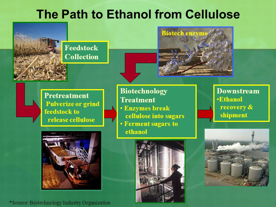 The Path to Ethanol from Cellulose Feedstock Collection Biotechnology Treatment Enzymes break cellulose into sugars Ferment sugars to ethanol Pretreatment Pulverize or grind feedstock to release cellulose Biotech enzyme Downstream Ethanol recovery & shipment *Source: Biotechnology Industry Organization