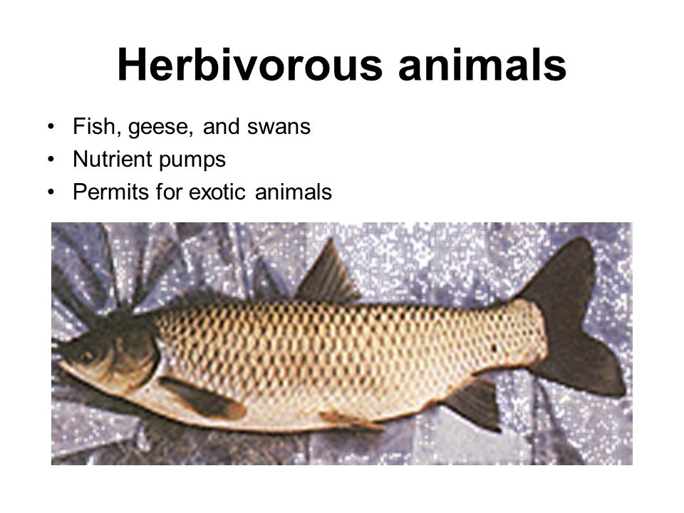 Herbivorous animals Fish, geese, and swans Nutrient pumps Permits for exotic animals