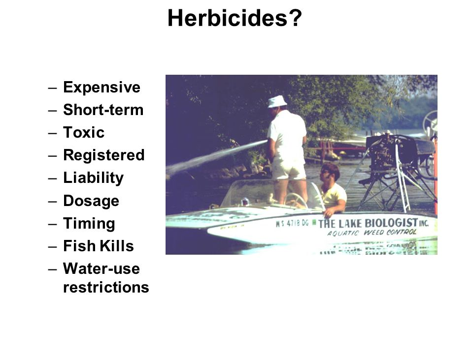 Herbicides? –Expensive –Short-term –Toxic –Registered –Liability –Dosage –Timing –Fish Kills –Water-use restrictions