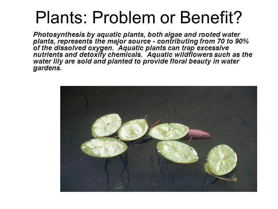 Plants: Problem or Benefit.