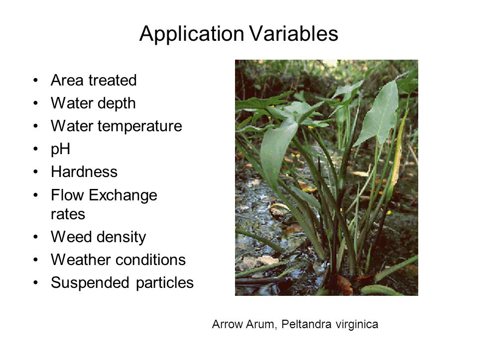 Application Variables Area treated Water depth Water temperature pH Hardness Flow Exchange rates Weed density Weather conditions Suspended particles Arrow Arum, Peltandra virginica