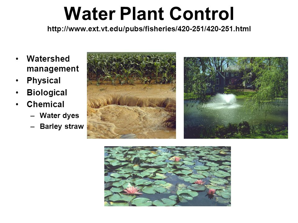 Water Plant Control http://www.ext.vt.edu/pubs/fisheries/420-251/420-251.html Watershed management Physical Biological Chemical –Water dyes –Barley straw