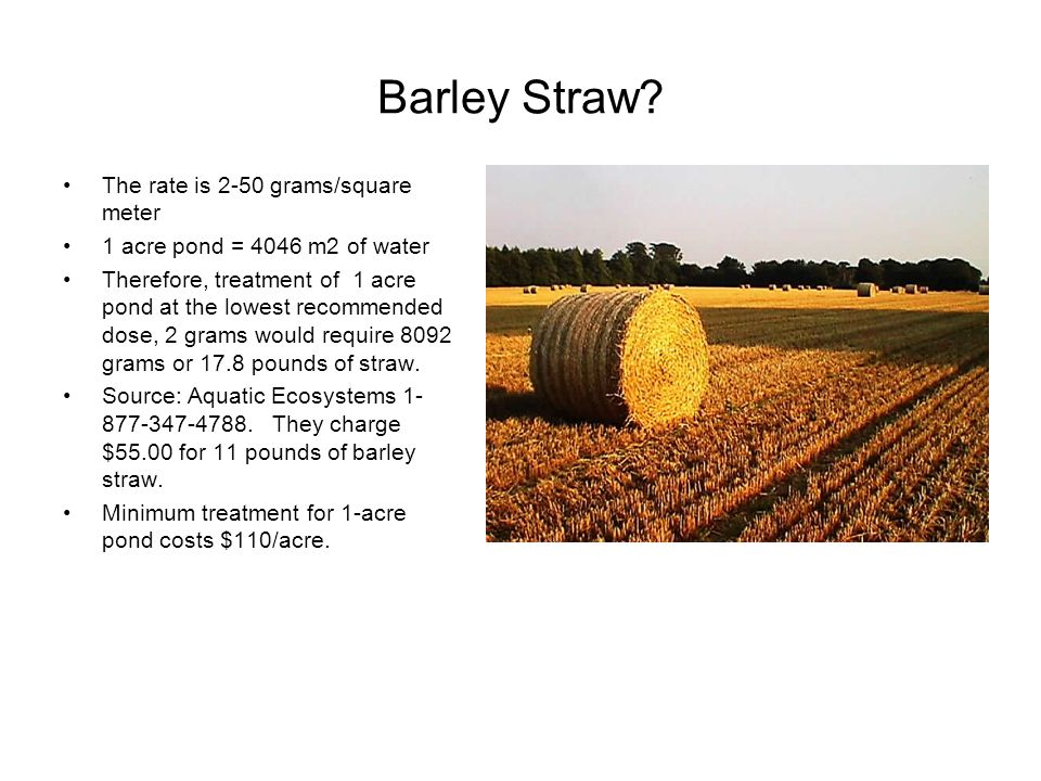 Barley Straw? The rate is 2-50 grams/square meter 1 acre pond = 4046 m2 of water Therefore, treatment of 1 acre pond at the lowest recommended dose, 2