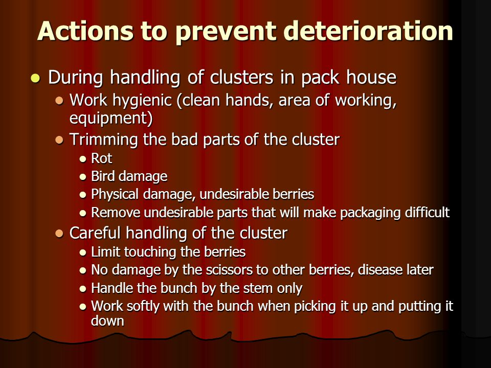 Actions to prevent deterioration During handling of clusters in pack house During handling of clusters in pack house Work hygienic (clean hands, area of working, equipment) Work hygienic (clean hands, area of working, equipment) Trimming the bad parts of the cluster Trimming the bad parts of the cluster Rot Rot Bird damage Bird damage Physical damage, undesirable berries Physical damage, undesirable berries Remove undesirable parts that will make packaging difficult Remove undesirable parts that will make packaging difficult Careful handling of the cluster Careful handling of the cluster Limit touching the berries Limit touching the berries No damage by the scissors to other berries, disease later No damage by the scissors to other berries, disease later Handle the bunch by the stem only Handle the bunch by the stem only Work softly with the bunch when picking it up and putting it down Work softly with the bunch when picking it up and putting it down