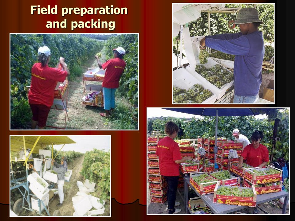 Field preparation and packing