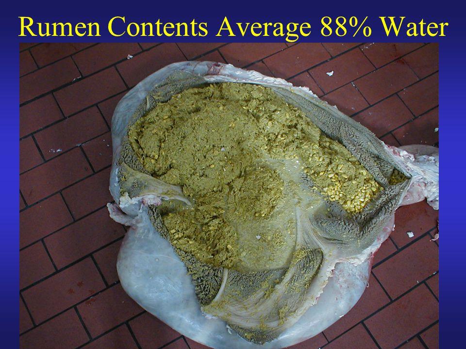 Rumen Contents Average 88% Water