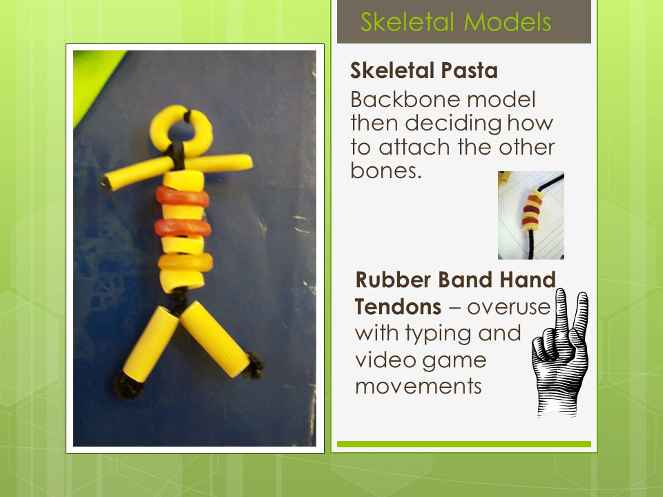Skeletal Models Skeletal Pasta Backbone model then deciding how to attach the other bones.