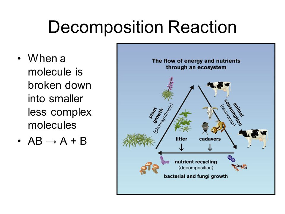 Decomposition Reaction When a molecule is broken down into smaller less complex molecules AB → A + B