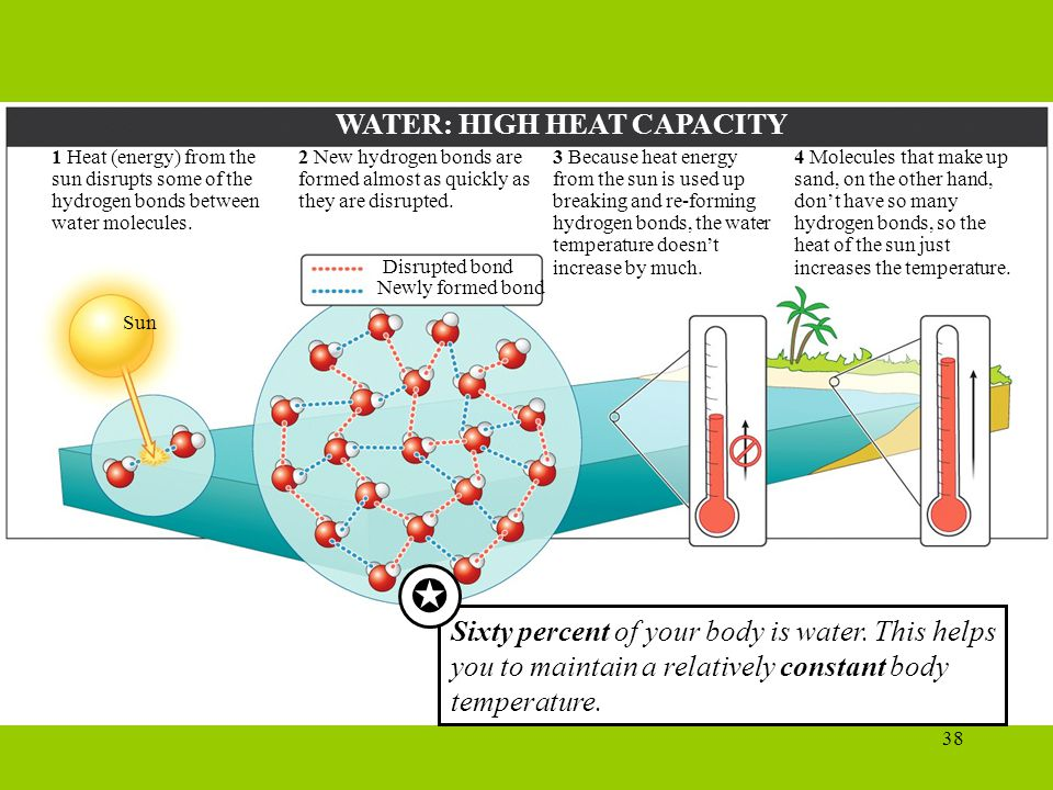 38 WATER: HIGH HEAT CAPACITY 4 Molecules that make up sand, on the other hand, don't have so many hydrogen bonds, so the heat of the sun just increases the temperature.