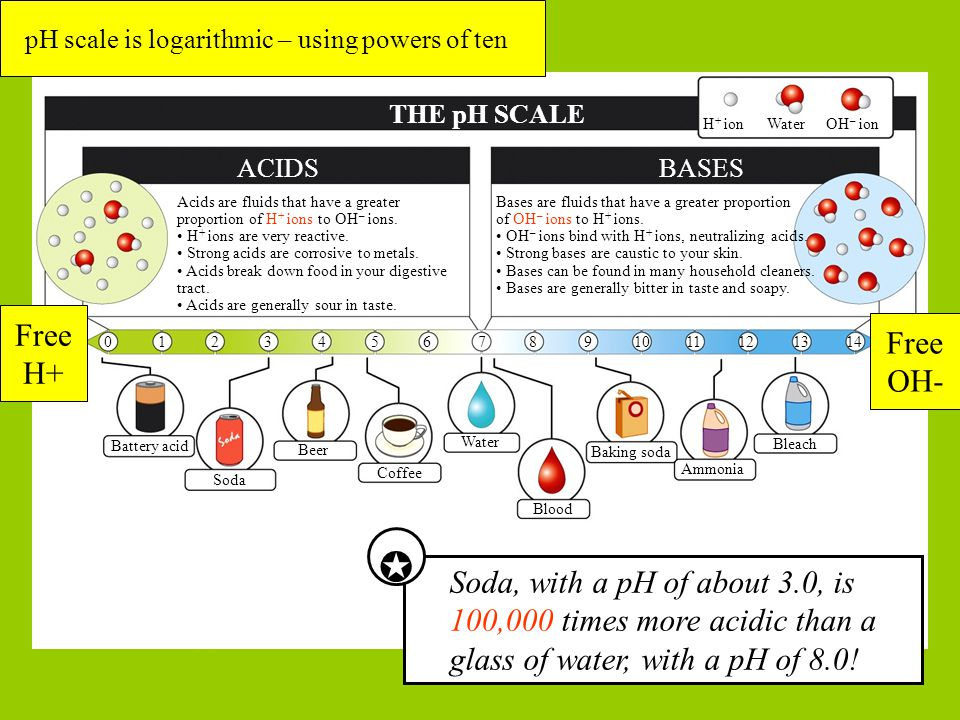 49 Blood THE pH SCALE ACIDSBASES H + ionWaterOH – ion Bases are fluids that have a greater proportion of OH – ions to H + ions.
