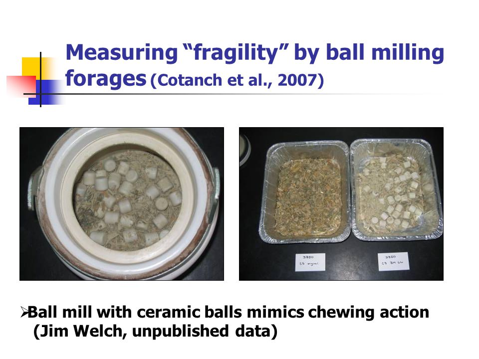 "Measuring ""fragility"" by ball milling forages (Cotanch et al., 2007)  Ball mill with ceramic balls mimics chewing action (Jim Welch, unpublished data"