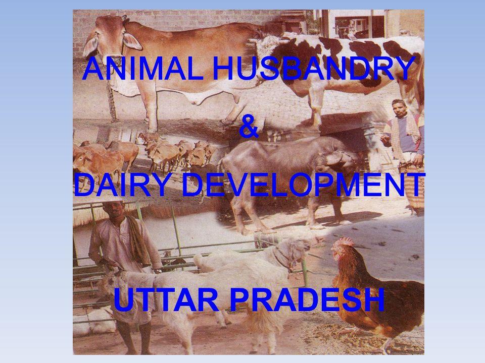 ANIMAL HUSBANDRY & DAIRY DEVELOPMENT UTTAR PRADESH