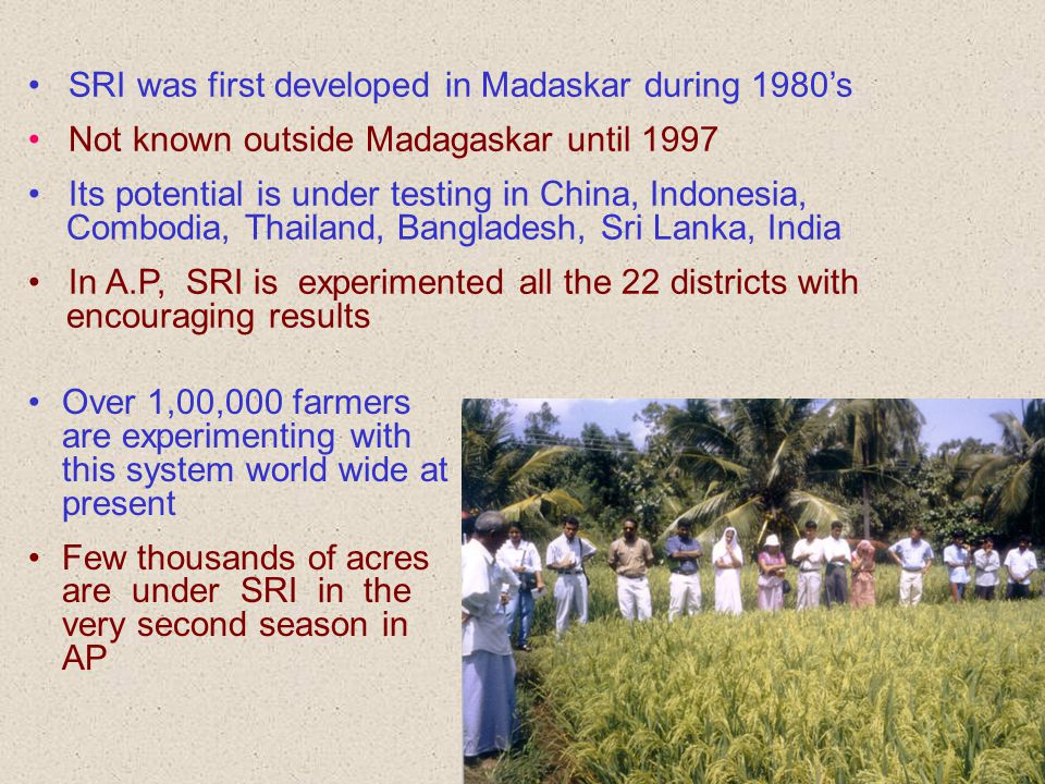 SRI was first developed in Madaskar during 1980's Not known outside Madagaskar until 1997 Its potential is under testing in China, Indonesia, Combodia, Thailand, Bangladesh, Sri Lanka, India In A.P, SRI is experimented all the 22 districts with encouraging results Over 1,00,000 farmers are experimenting with this system world wide at present Few thousands of acres are under SRI in the very second season in AP