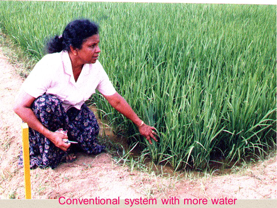 Conventional system with more water