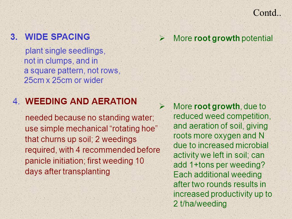 Contd.. 3.WIDE SPACING plant single seedlings, not in clumps, and in a square pattern, not rows, 25cm x 25cm or wider 4. WEEDING AND AERATION needed b