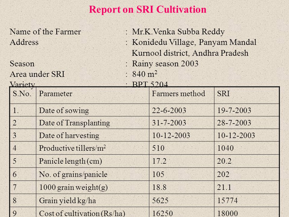 Report on SRI Cultivation Name of the Farmer: Mr.K.Venka Subba Reddy Address: Konidedu Village, Panyam Mandal Kurnool district, Andhra Pradesh Season: Rainy season 2003 Area under SRI: 840 m 2 Variety: BPT 5204 S.No.ParameterFarmers methodSRI 1.Date of sowing22-6-200319-7-2003 2Date of Transplanting31-7-200328-7-2003 3Date of harvesting10-12-2003 4Productive tillers/m 2 5101040 5Panicle length (cm)17.220.2 6No.