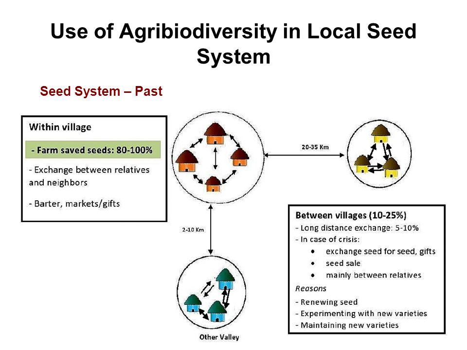 Use of Agribiodiversity in Local Seed System Seed System – Past