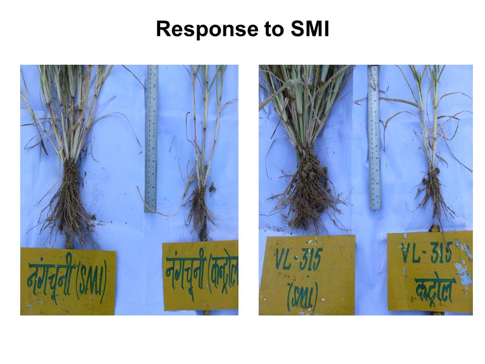 Response to SMI