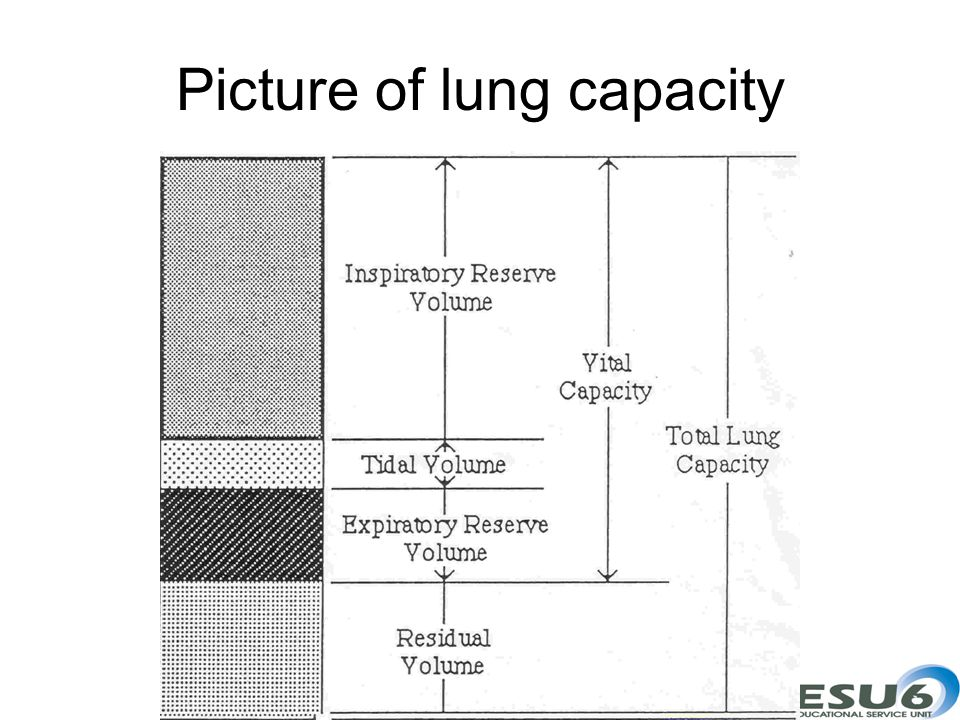 Picture of lung capacity
