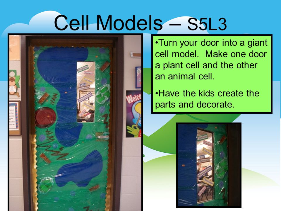 Cell Models – S5L3 Turn your door into a giant cell model.