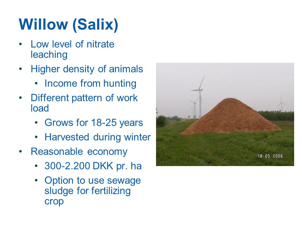 Willow (Salix) Low level of nitrate leaching Higher density of animals Income from hunting Different pattern of work load Grows for 18-25 years Harvested during winter Reasonable economy 300-2.200 DKK pr.