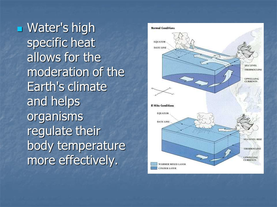 Water's high specific heat allows for the moderation of the Earth's climate and helps organisms regulate their body temperature more effectively. Wate