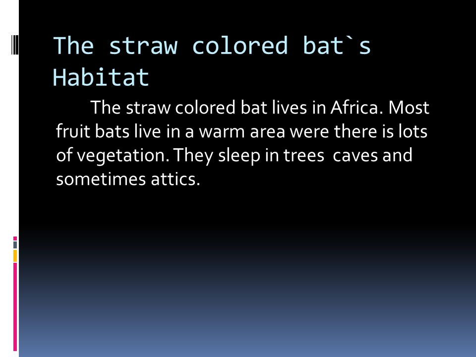 Description The straw colored bat`s description is, straw colored fur that is how they got their name.