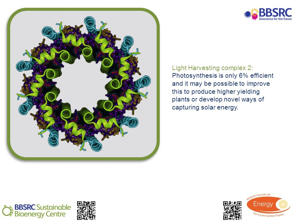 Light Harvesting complex 2: Photosynthesis is only 6% efficient and it may be possible to improve this to produce higher yielding plants or develop novel ways of capturing solar energy.