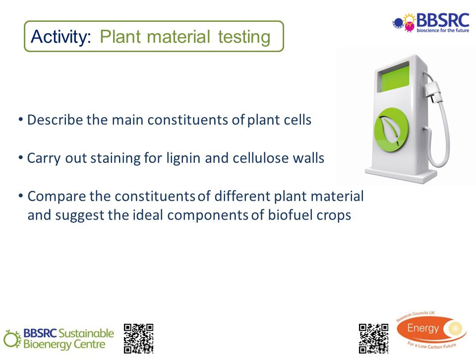 Activity: Plant material testing Describe the main constituents of plant cells Carry out staining for lignin and cellulose walls Compare the constituents of different plant material and suggest the ideal components of biofuel crops
