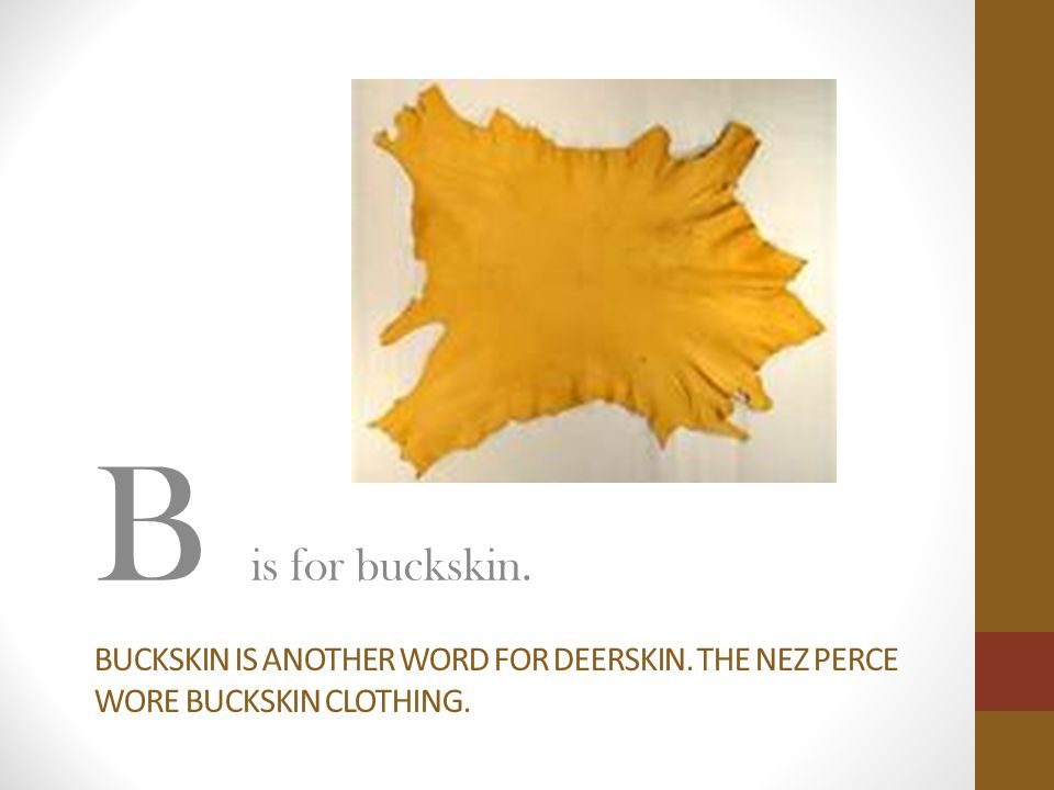 BUCKSKIN IS ANOTHER WORD FOR DEERSKIN. THE NEZ PERCE WORE BUCKSKIN CLOTHING. B is for buckskin.