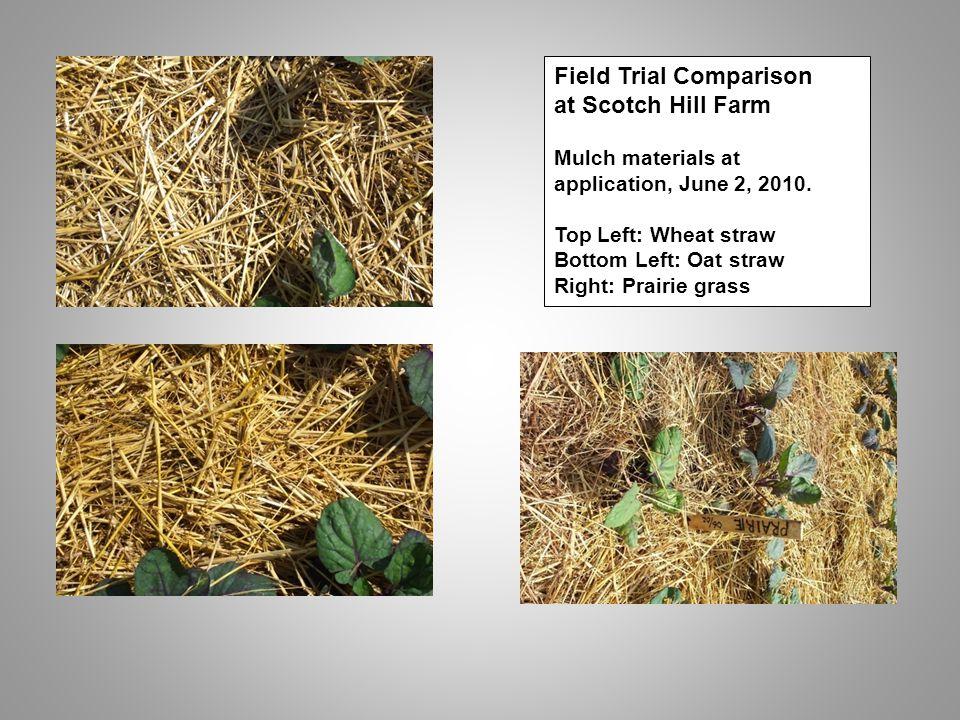 Field Trial Comparison at Scotch Hill Farm Mulch materials at application, June 2, 2010.