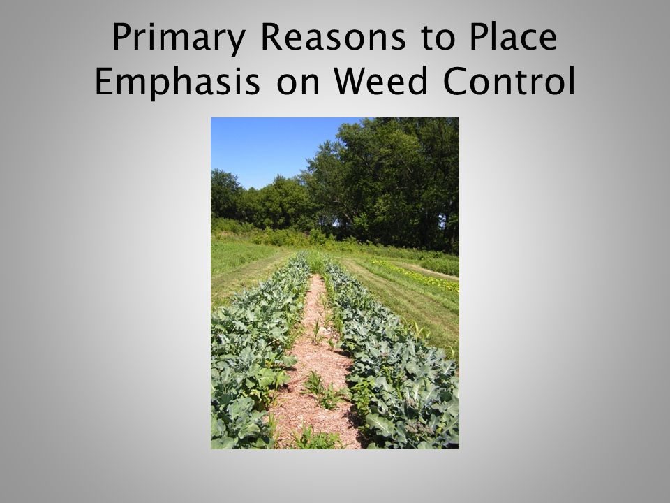 Primary Reasons to Place Emphasis on Weed Control