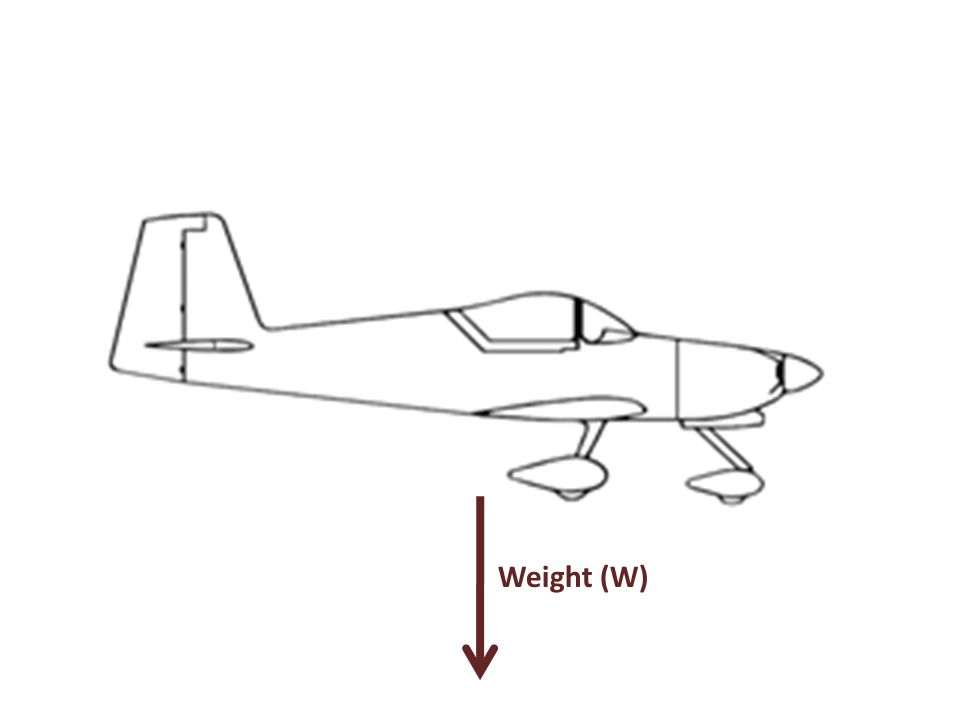 Weight (W)
