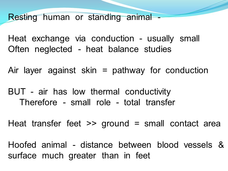 Resting human or standing animal - Heat exchange via conduction - usually small Often neglected - heat balance studies Air layer against skin = pathway for conduction BUT - air has low thermal conductivity Therefore - small role - total transfer Heat transfer feet >> ground = small contact area Hoofed animal - distance between blood vessels & surface much greater than in feet