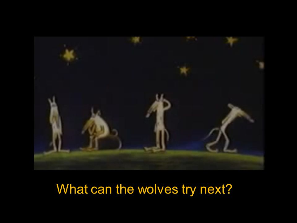 What can the wolves try next?
