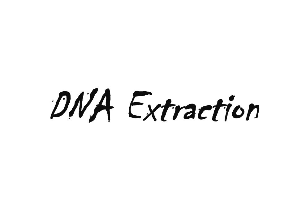 Abstract 1.The purpose of this project was to determine whether different types of DNA would affect how easily the DNA was extracted, and which of the three types would be the hardest to extract.