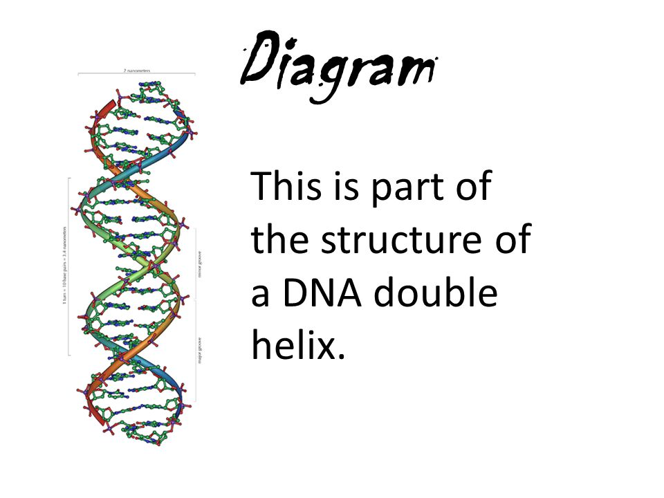 Diagram This is part of the structure of a DNA double helix.