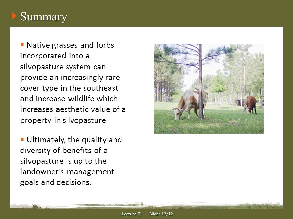 Summary {Lecture 7} Slide: 12/12  Native grasses and forbs incorporated into a silvopasture system can provide an increasingly rare cover type in the southeast and increase wildlife which increases aesthetic value of a property in silvopasture.
